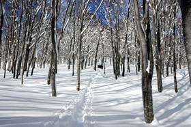 snow-trek-4