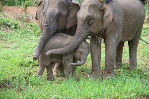 GDL elephant