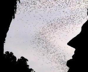 bats-lang-caves-550x450