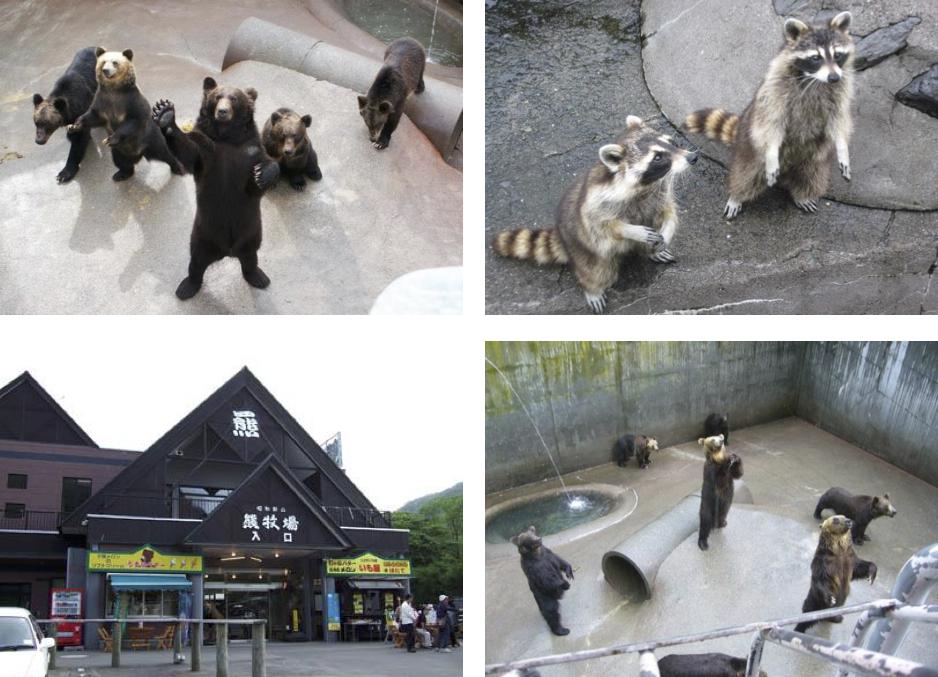 Showa-shinzan Bear Ranch